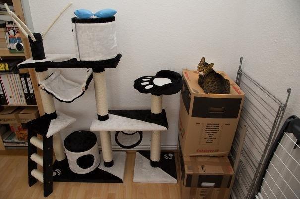logica-dos-gatos-1