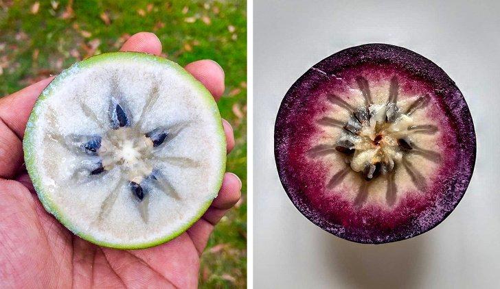 16 Raras y exóticas frutas que verás por primera vez (nos gustaría probar el pacay)