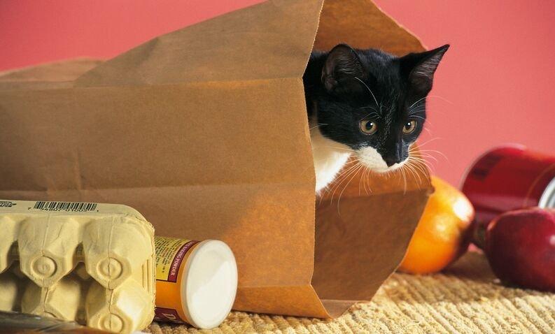 Resultado de imagen de gato entrando a casa