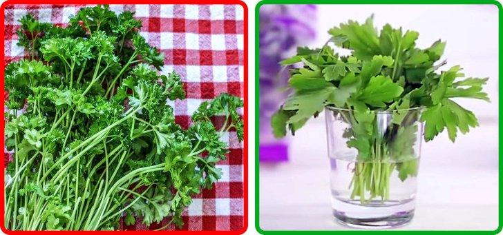 15Tips para conservar frutas yverduras (ylos nutrientes deacuerdo asucolor)