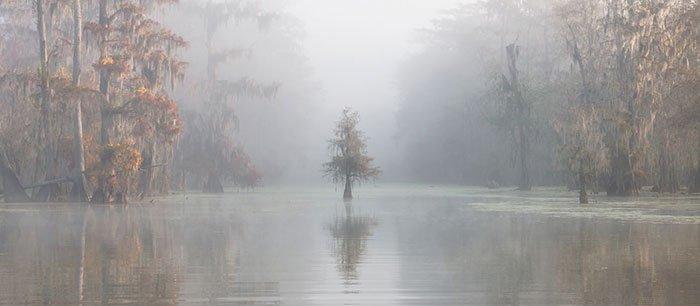 2018 International Landscape Photograph Of The Year 3rd Place, Atchafalaya Basin, Louisiana, Usa, Roberto Marchegiani