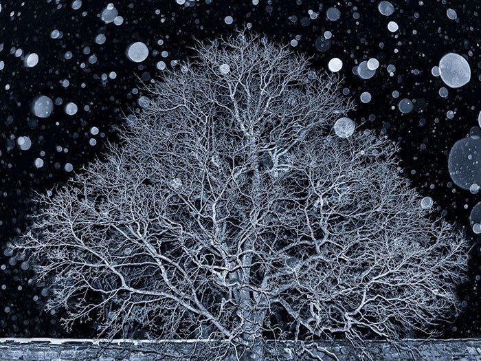 2018 The Exemplary Tree Award, Oslo, Norway, Ann Kristin Lindaas
