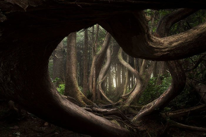 Landscape Photographer: Winner, Botanical Bay, Port Renfrew, Vancouver Island, Brittish Columbia, Canada, Adam Gibbs