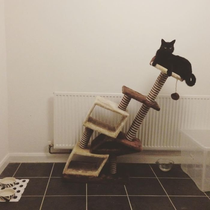 Never Buy A Cat Tree From Amazon