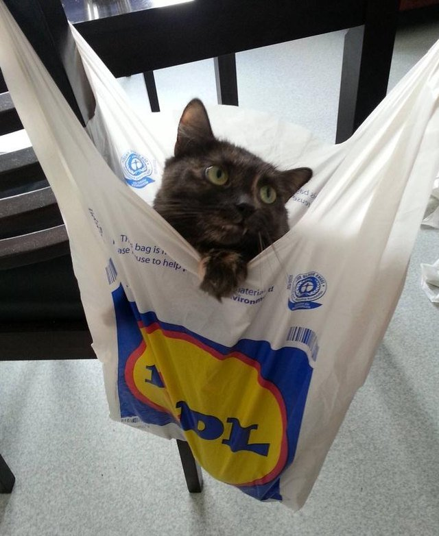 Cat using a plastic bag as a hammock