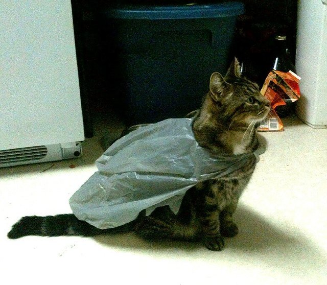 Cat wearing a plastic bag like a cape