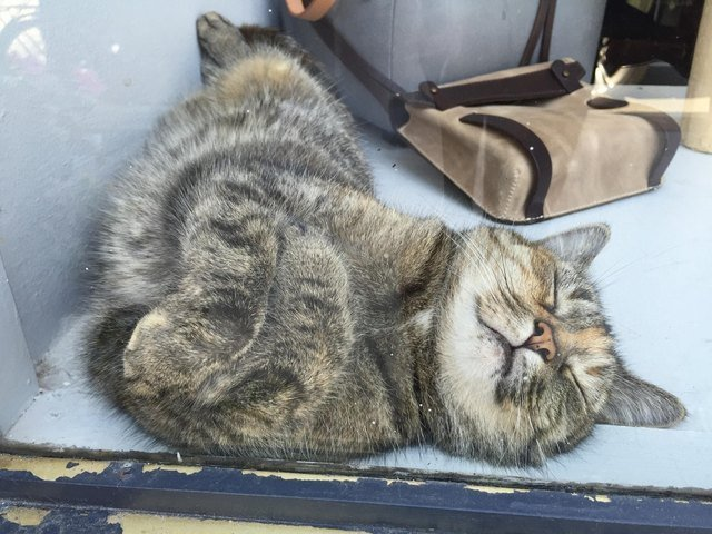 Happy-looking cat sleeping on a windowsill.