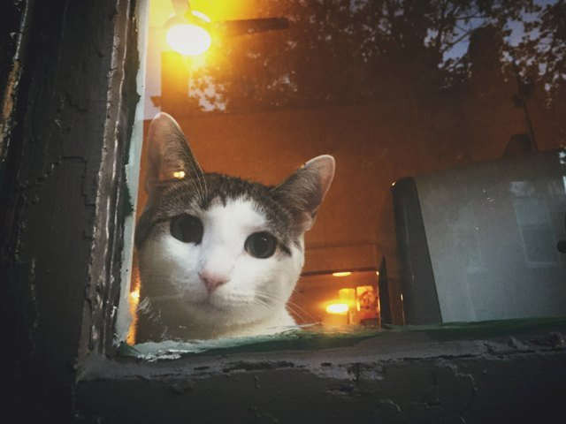 Cat in a window.
