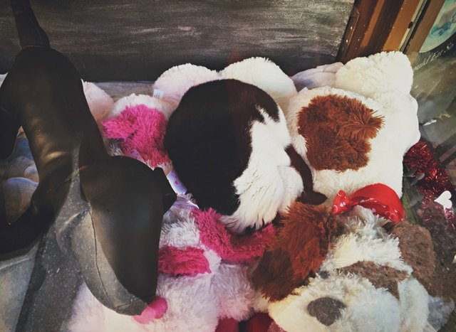 Cat curled up with stuffed animals.