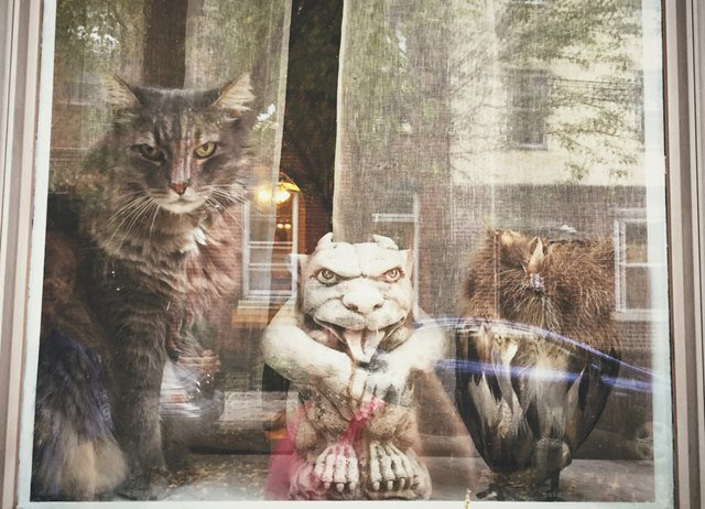 Cat in window with two gargoyle statues.