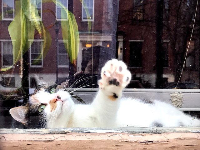 Cat pressing its paw against a window.