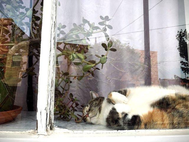 Chubby cat sleeping a window.