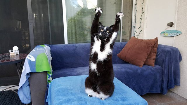 Cat sitting with his arms stretched up