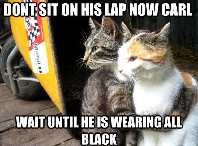 22 Cats Who Think They