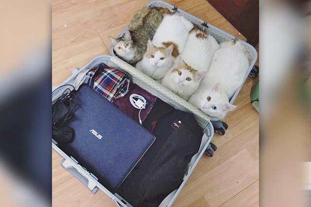 four cat loaves in a suit case