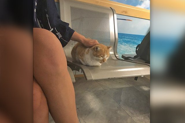 cat loaf at the airport