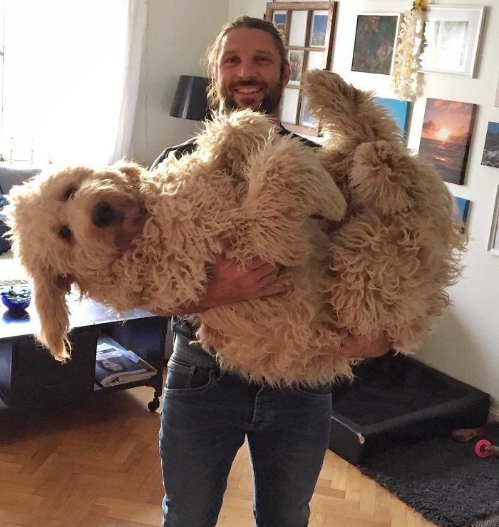 Meet Fabbe. He's A Big Fluffy Baby