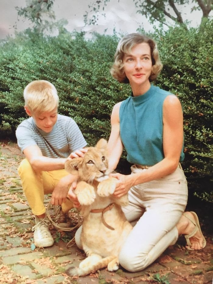 My Dad And His Veterinarian Mother, With Their Pet Lion Which They Raised For Two Years, 1959