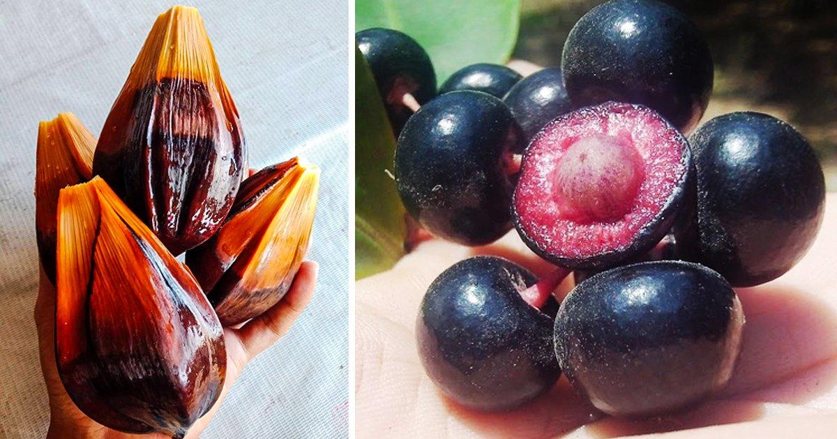 2 364.jpg?resize=412,232 - 16 Raras y exóticas frutas que verás por primera vez