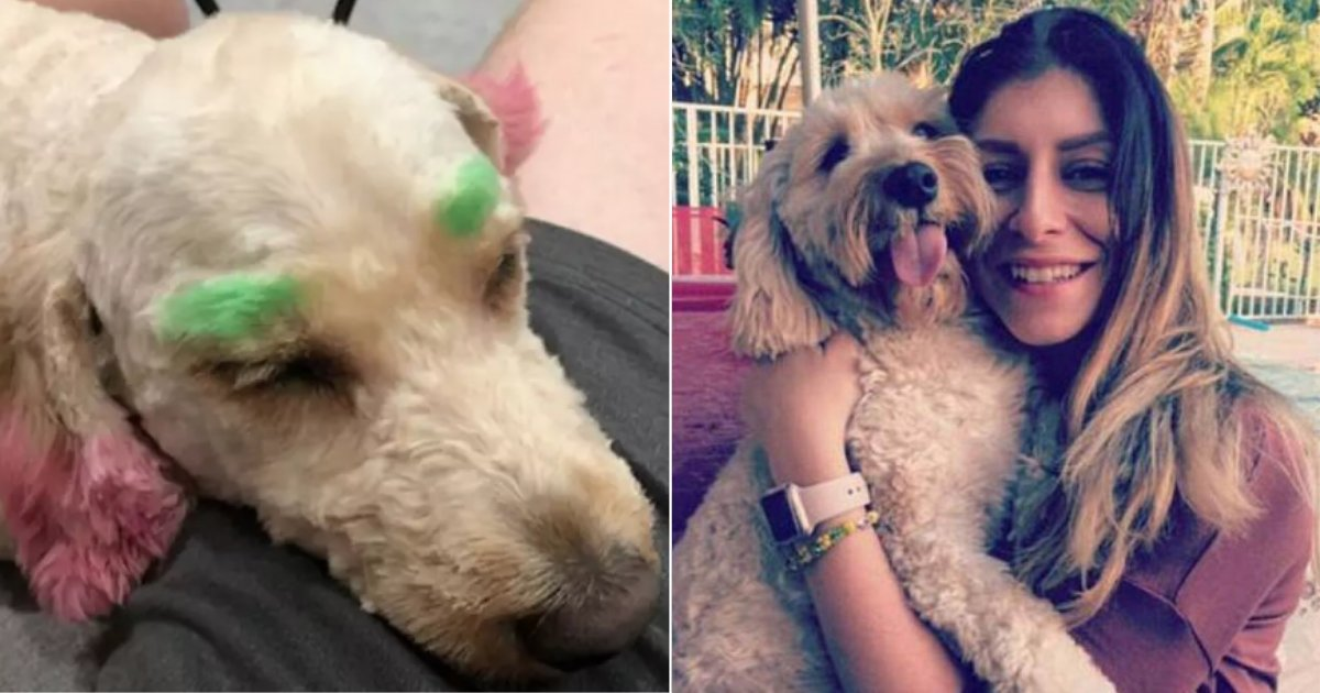 21y5.png?resize=412,232 - Pet Owner Regretted Sending Her Dog To Groomer After They Made Her Look Like A Clown