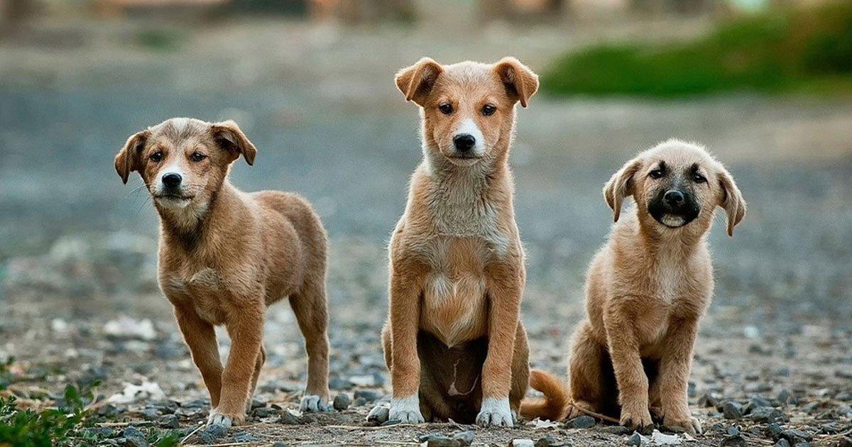 6 things dog can sense about humans.jpg?resize=300,169 - 6 choses inattendues que les chiens peuvent détecter avec leur flaire