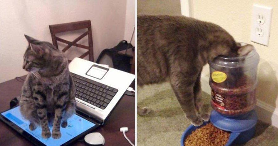 a2 18.jpg?resize=412,232 - A lógica dos gatos explicada em 23 exemplos hilários – sério!