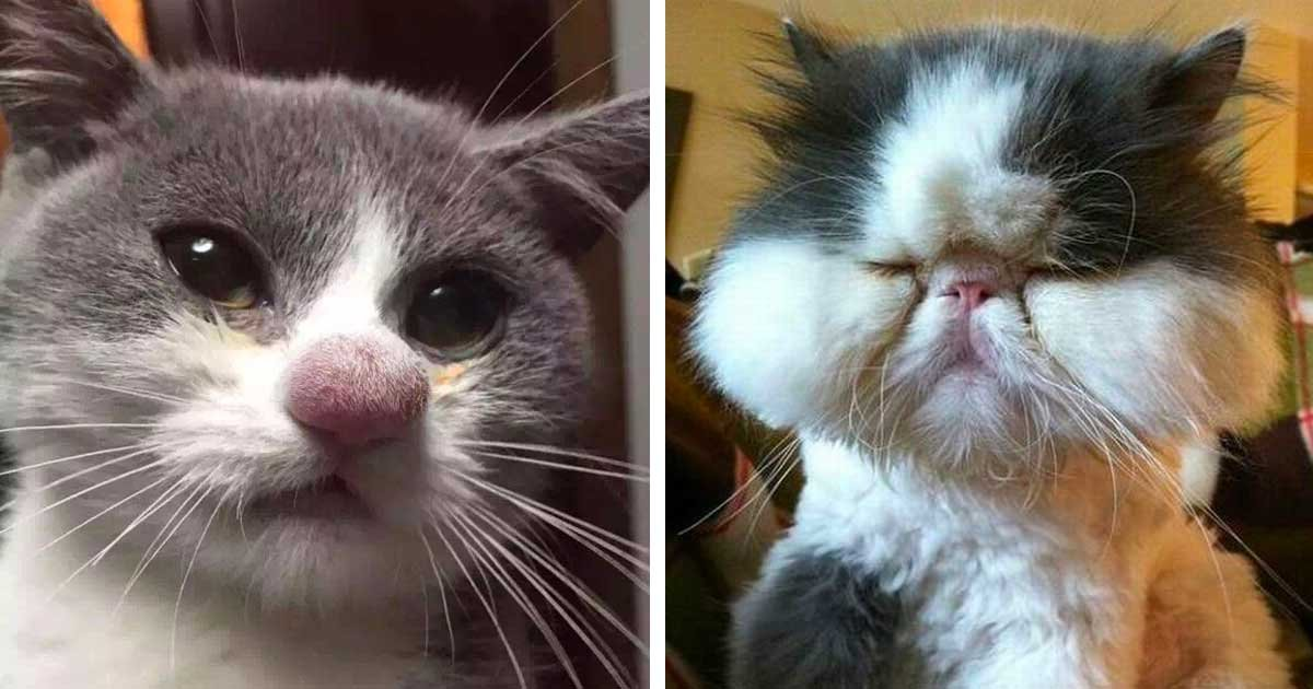 bee sting.jpeg?resize=412,232 - 30+ Times Cats Were Stung By Bees And People Are Laughing And Crying At The Same Time