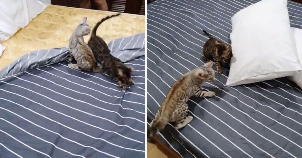 bengal kittens changing sheets.jpg?resize=412,232 - Bengal Kittens Helping The Owner Change Sheets But In Their Own Way