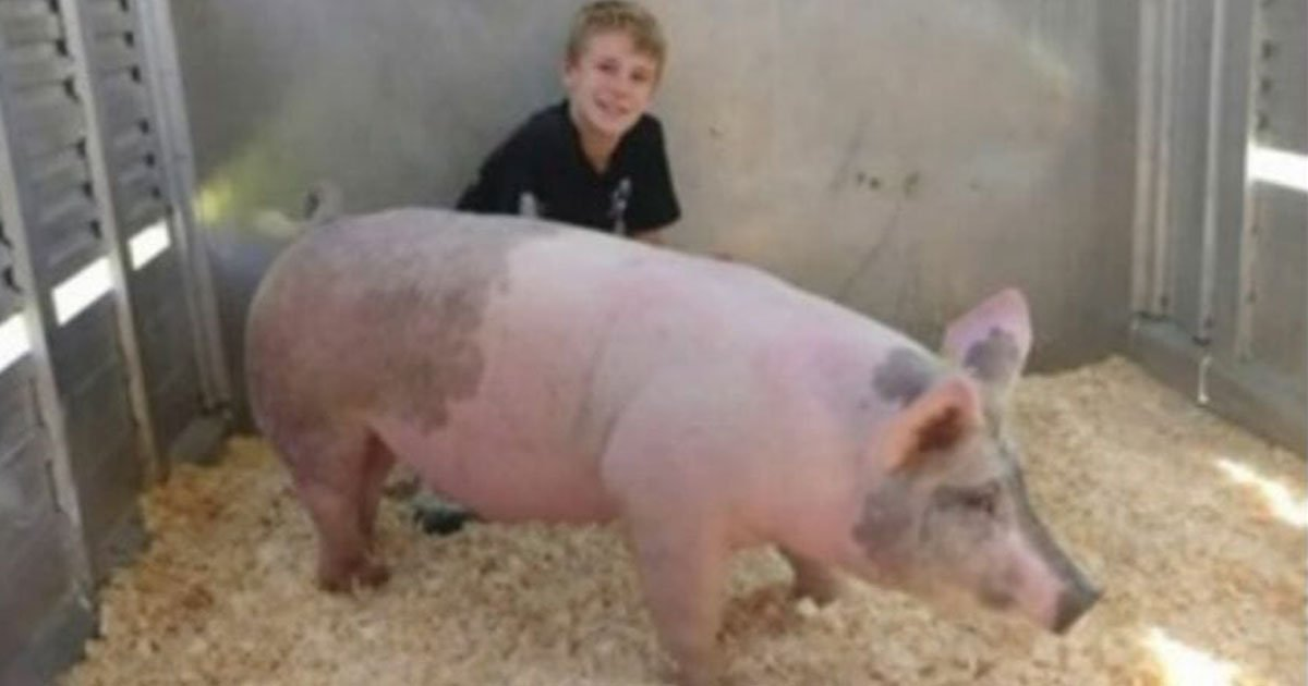 boy auctioned his pet pig millhouse to help childrens cancer charity.jpg?resize=412,232 - Teens Auctioned Their Hog To Donate To The Children's Cancer Charity