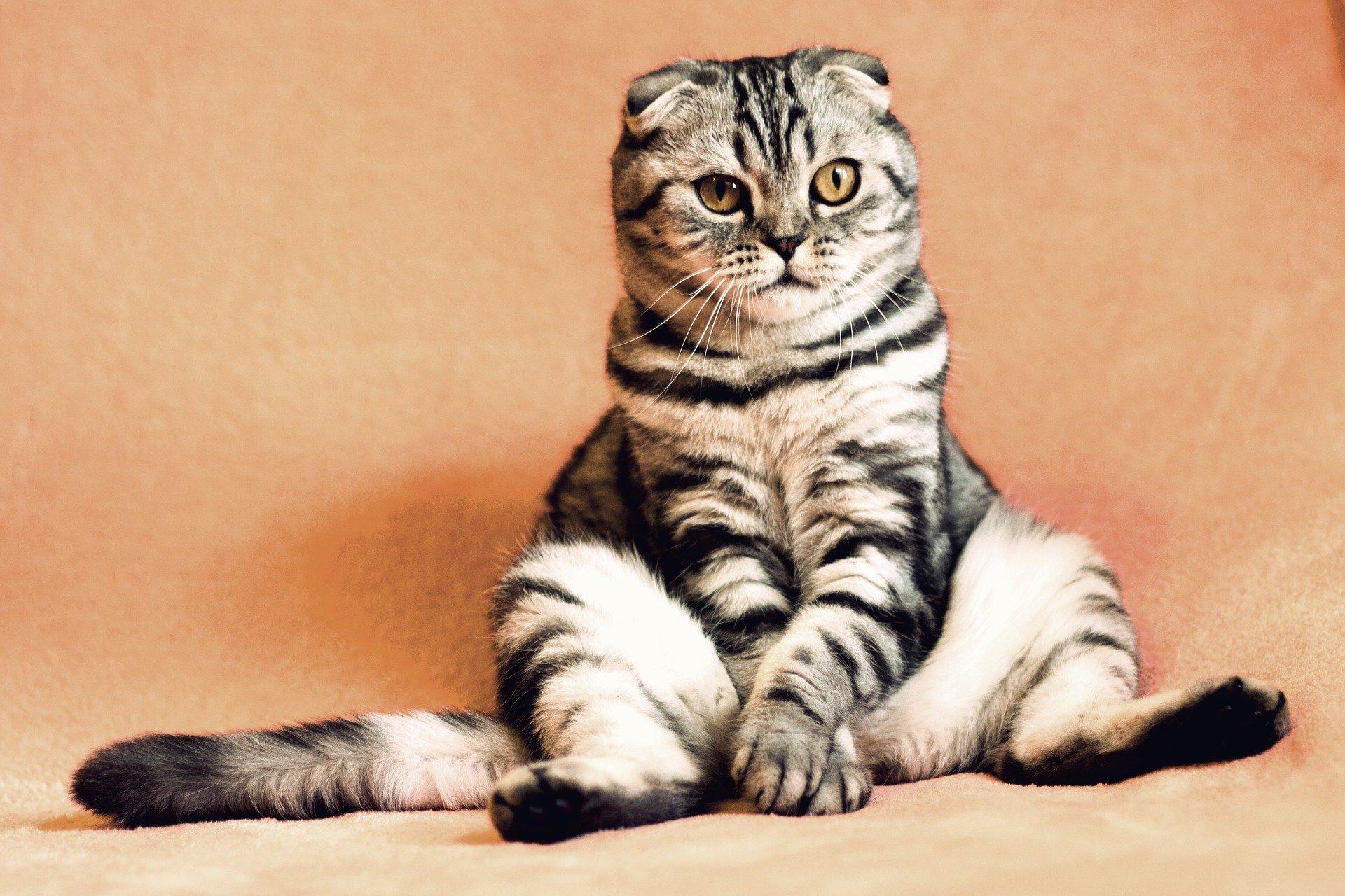 cat 2934720 1920 1.jpg?resize=412,232 - Le vaccin contre l'allergie aux chats arrive bientôt!