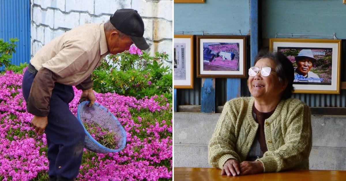couple6.png?resize=412,232 - After Wife Lost Her Sight, Loving Husband Spent TWO Years Planting Thousands Of Flowers For Her