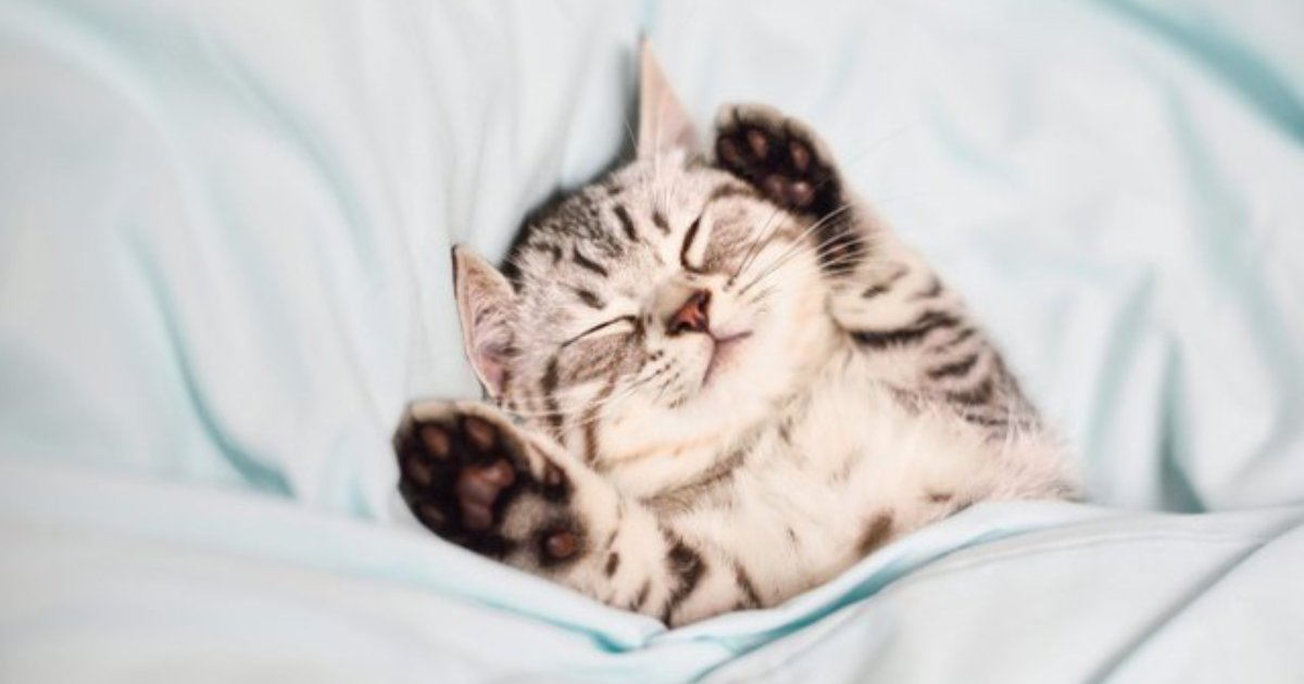 cute catto.png?resize=412,232 - 15+ Photos Of Cats That Will Definitely Brighten Your Day