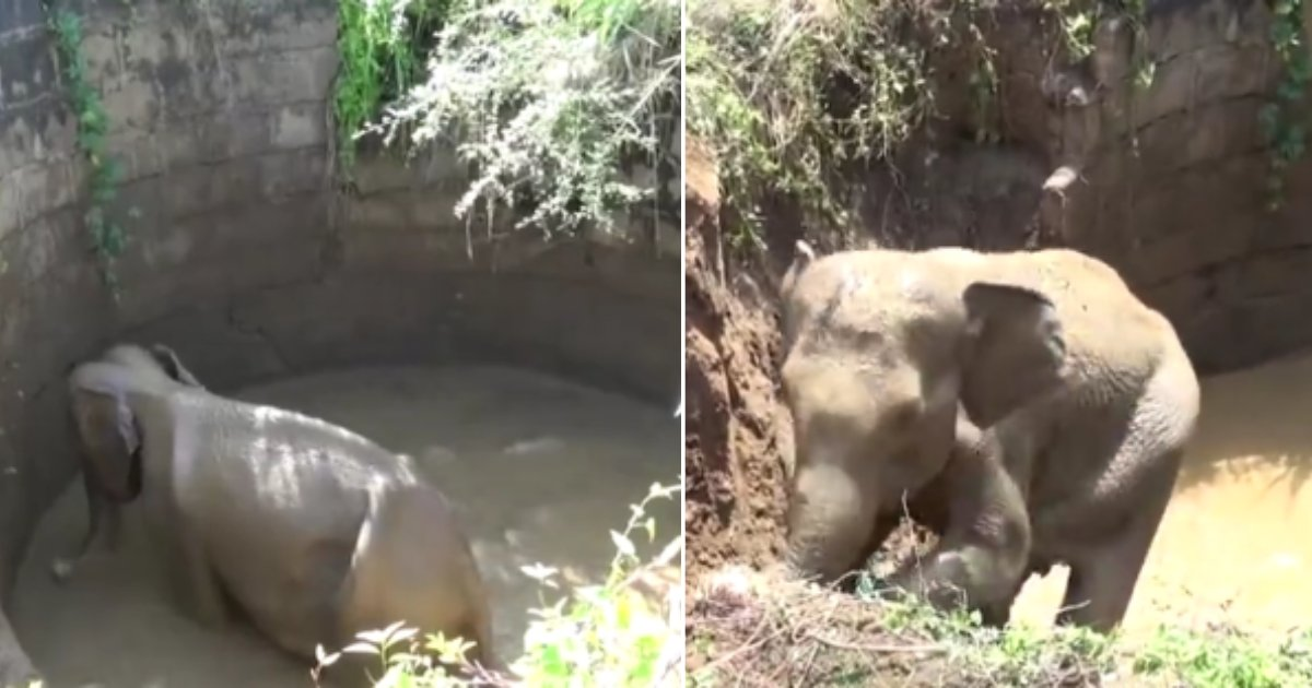 d 2 5.png?resize=412,232 - A Baby Elephant Successfully Rescued From The Well