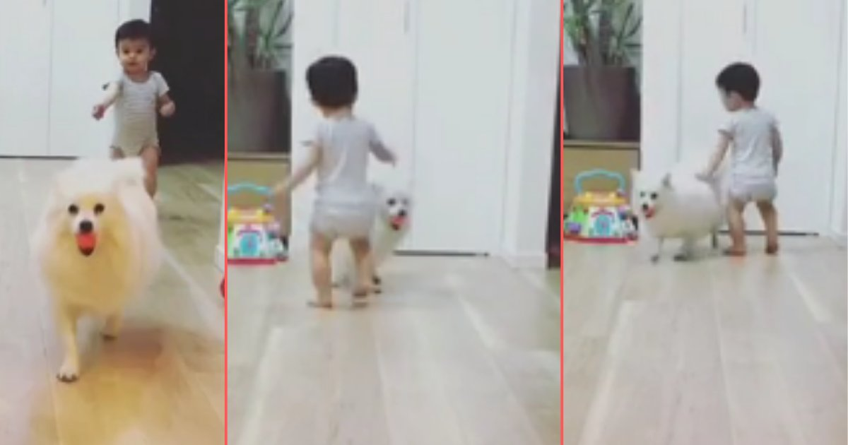 d 4 5.png?resize=412,232 - Adorable Pup and Toddler Take Turns Playing Fetch