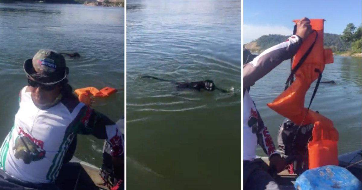 d3 3.png?resize=412,232 - Monkey is Rescued by Fishermen Who Threw Lifejacket at Him