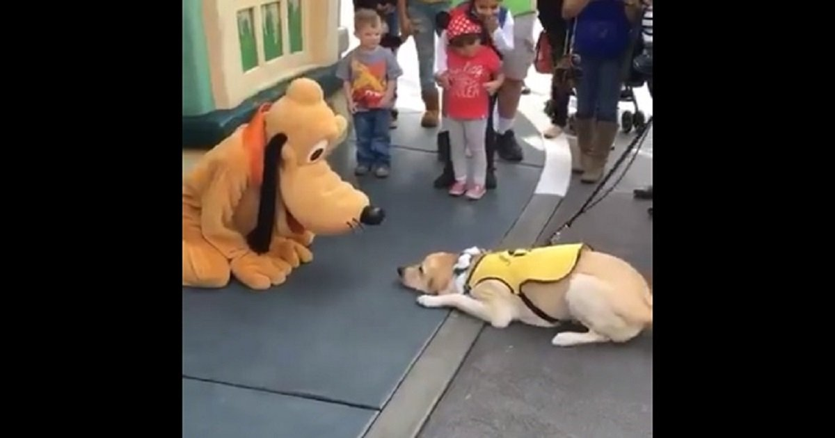 d3 4.jpg?resize=1200,630 - A Service Dog Got So Excited After Meeting Pluto In Disneyland