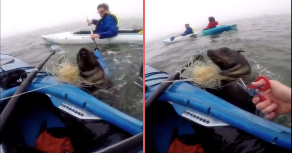 d4 4.png?resize=412,232 - American Kayaker Saves Seal Stuck in a Fishing Line in Namibia