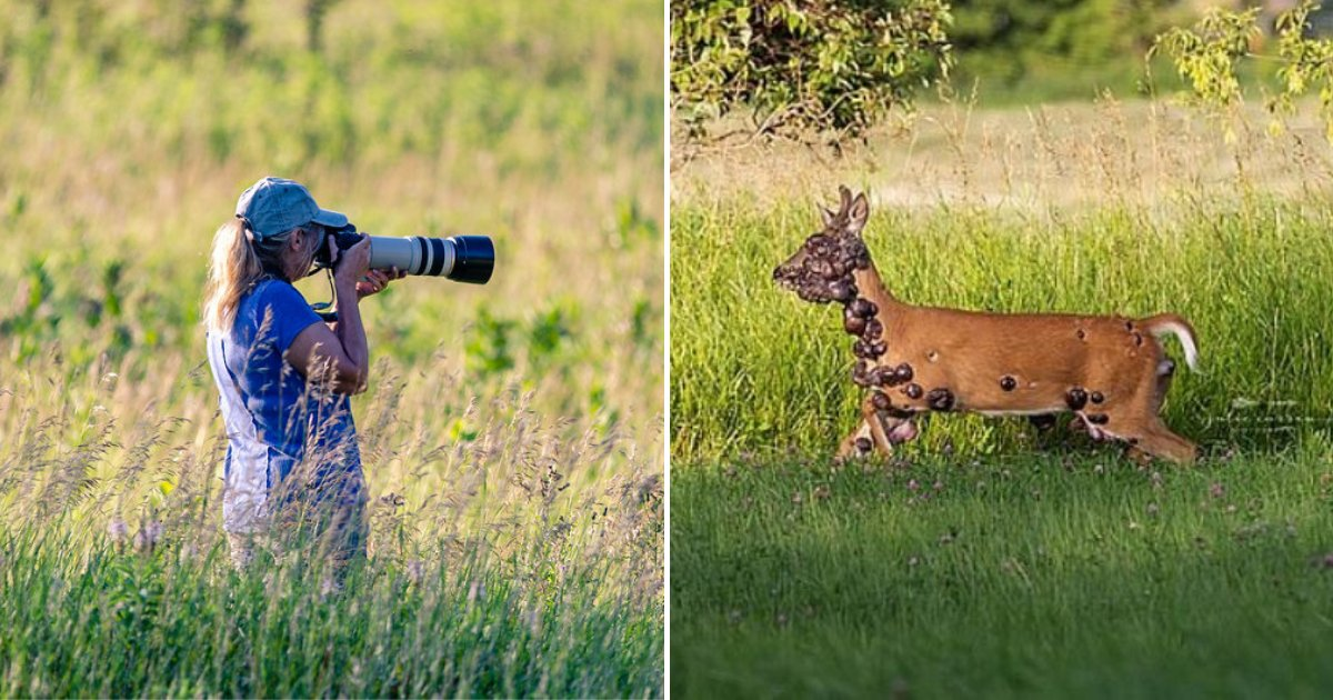 deer4.png?resize=412,232 - Heartbreaking Photos Of Deer Covered In Many Large Growths Went Viral