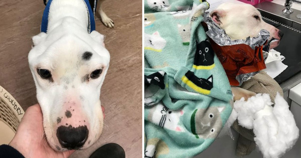 dog abandoned.jpg?resize=1200,630 - Dog - Who Was Forced To Eat Glass And Batteries After Being Dumped By The Owner - Is On The Road To Recovery