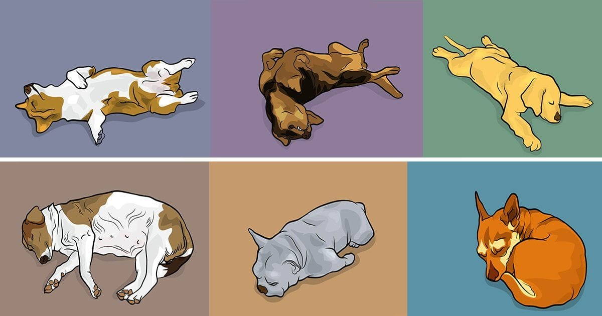 dog positions.jpeg?resize=1200,630 - Meanings Of 50+ Different Dog Behaviors, Sleeping Positions, And Faces