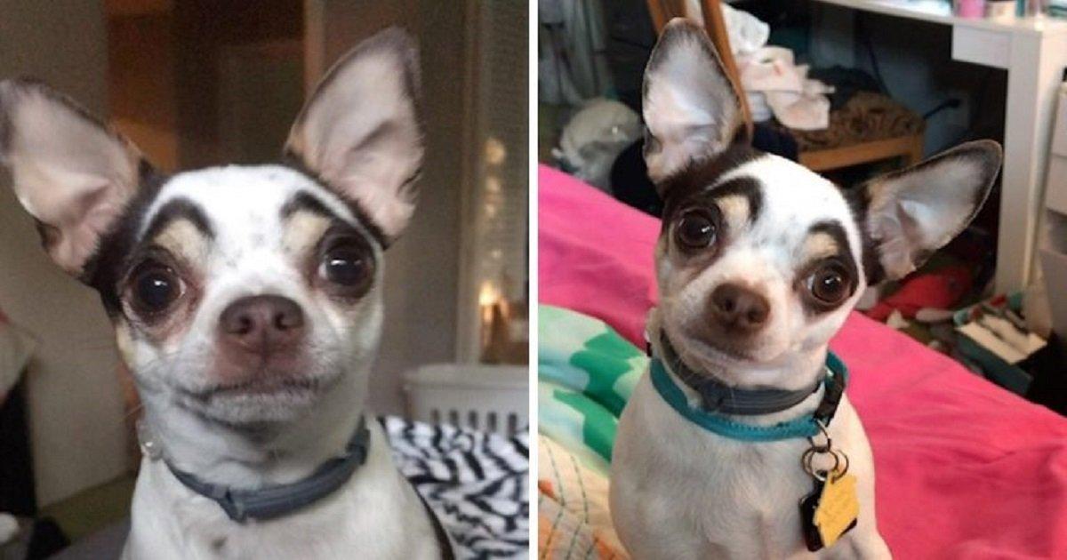 e3 2.jpg?resize=1200,630 - Cet adorable chien ne manque jamais de faire tourner les têtes grâce à ses sourcils naturels