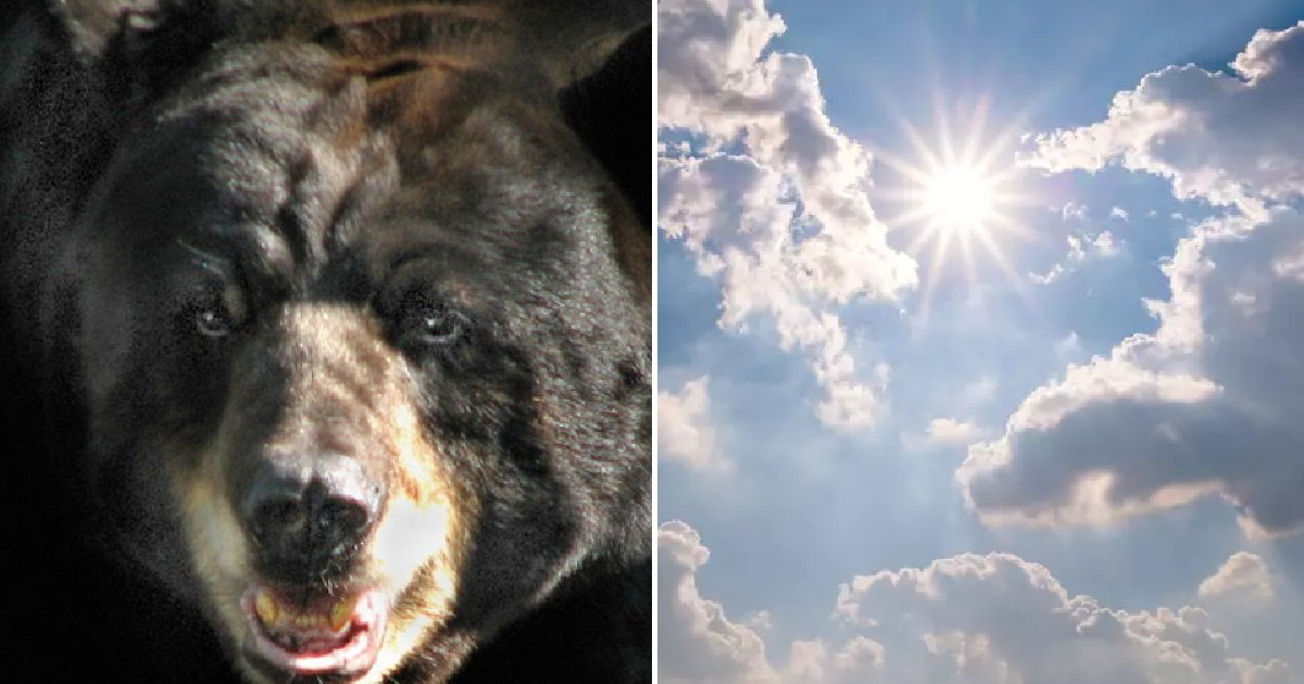 "eca09cebaaa9 ec9786ec9d8c 32.png?resize=412,232 - ""너무 더워서 그만..."" 곰이 푹푹 찌는 '폭염'을 이겨내는 방법 (영상)"