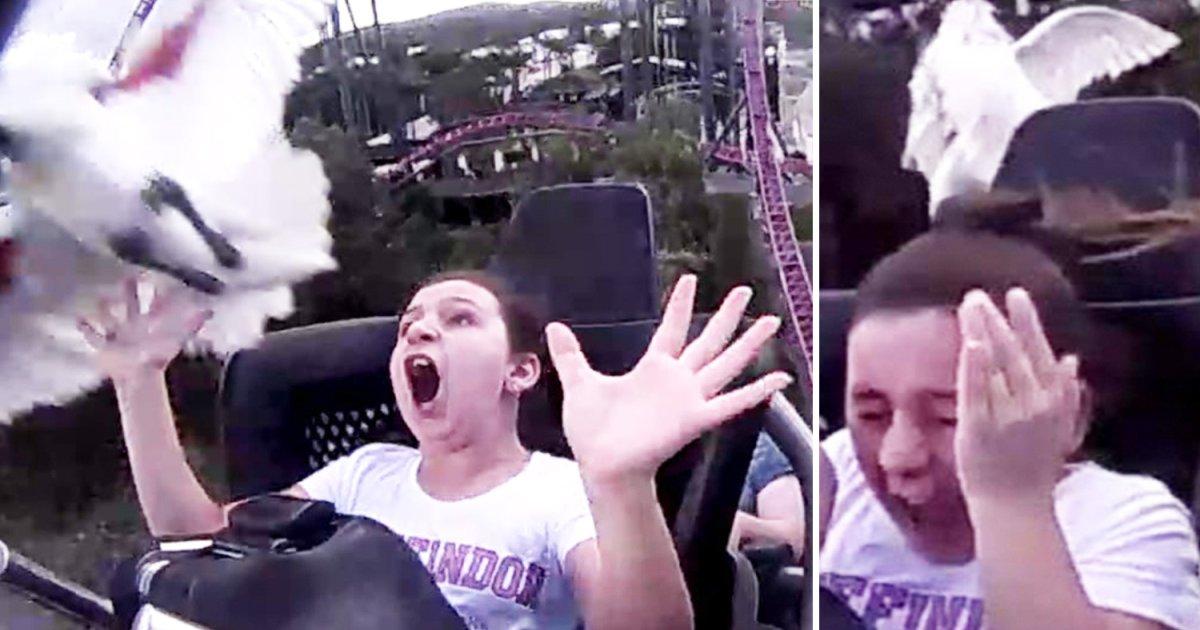 featured image 2.png?resize=412,232 - Accident de montagne russe : Une fillette se prend un oiseau sur la tête en pleine attraction