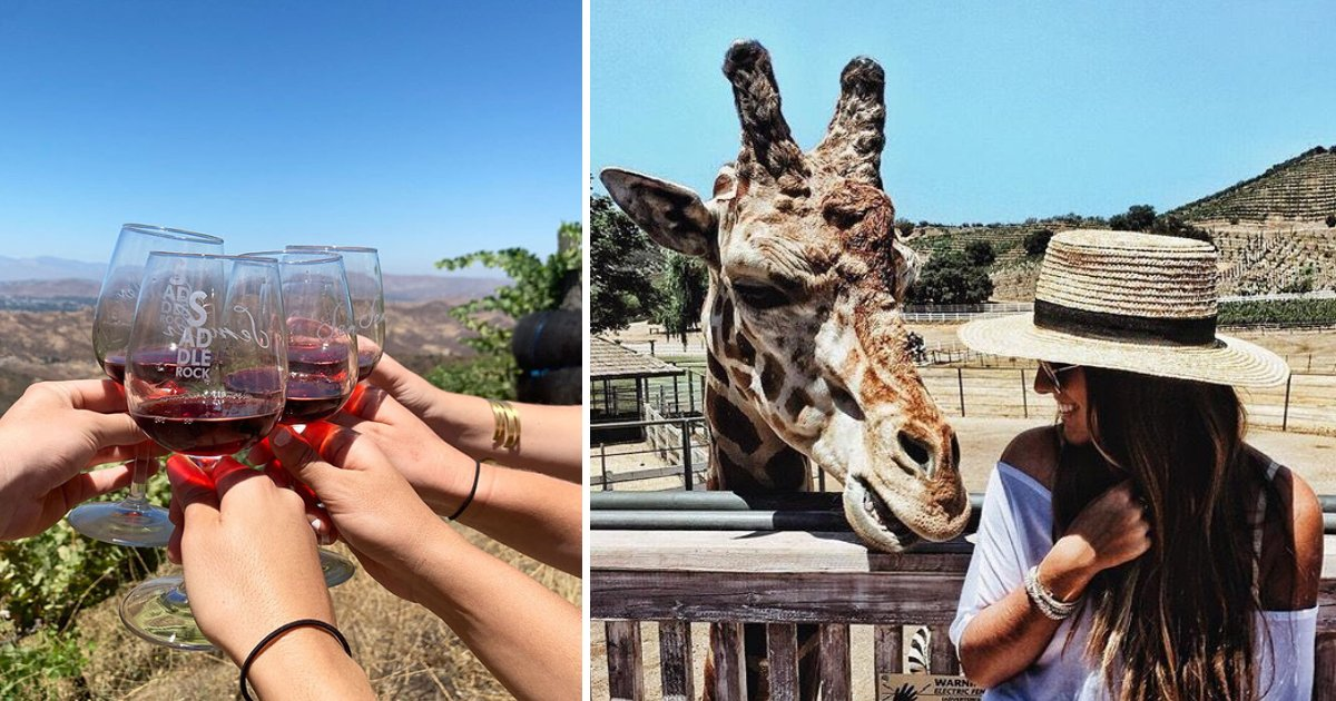 featured image 26.png?resize=412,232 - This Safari Lets You Taste Different Wines While Petting A Giraffe