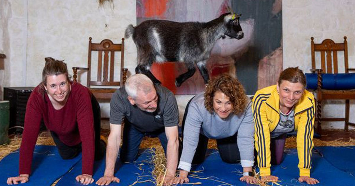 fitness class with goats.jpg?resize=412,232 - Fitness Class In Scotland Practices An Unusual Exercise With Goats