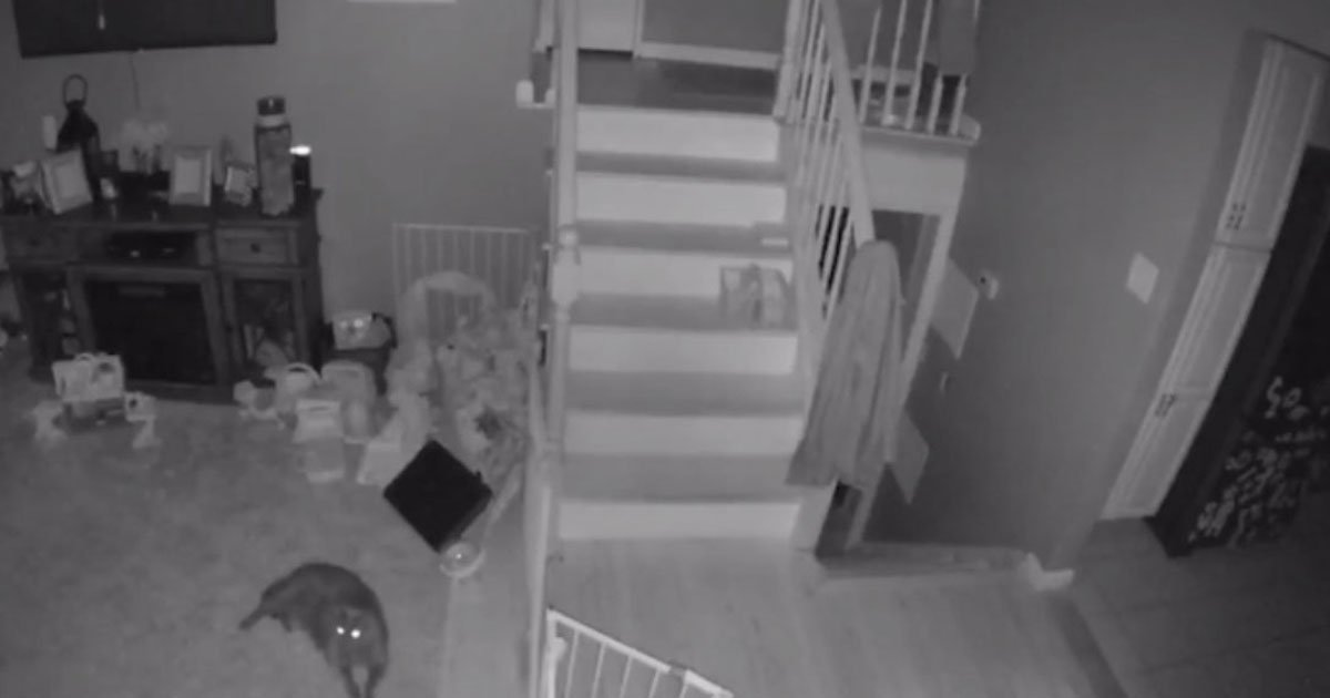 ghost little boy and pet.jpg?resize=1200,630 - Ghost Of A Little Boy And His Pet Walking Through A Family Home Caught On A Camera