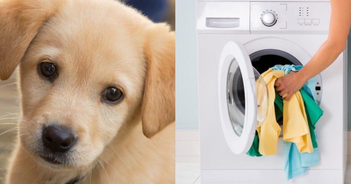 img 4810.jpg?resize=1200,630 - 【最低】畜生すぎる鬼の飼い主!!子犬を衣類乾燥機に放り込み回転