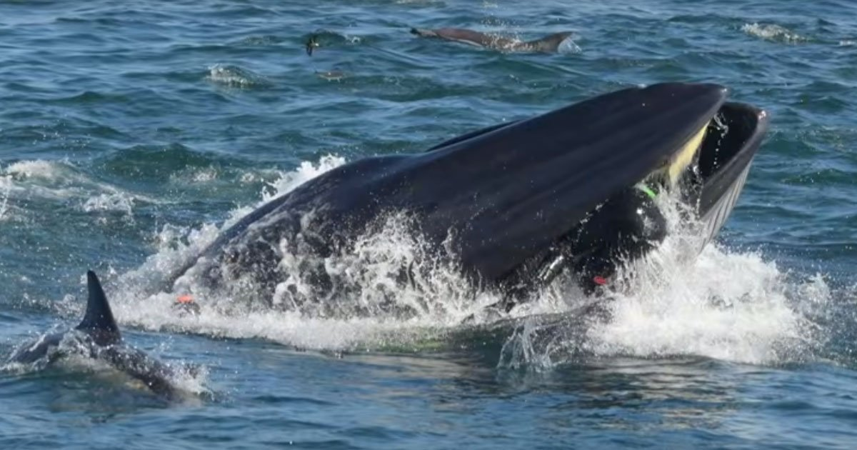 man swallowed by whale.jpg?resize=412,232 - Man Nearly Swallowed By A Bryde's Whale