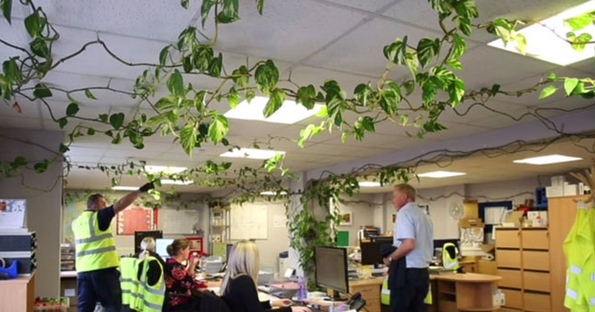 monster plantoffice 1.jpg?resize=412,232 - A Small Plant Planted Ten Years Ago Is Now 300ft Long