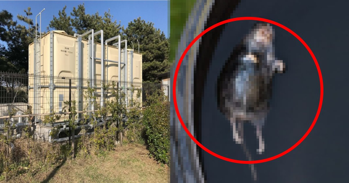 mouse 1.png?resize=1200,630 - ネズミ侵入‼ 高校の受水槽で発見、ナゼ…